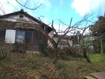 梅の樹.JPG