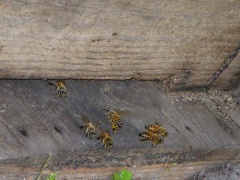 蜂さんの家.JPG
